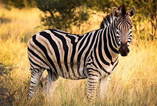 AOFOTO 7x5ft Zebra In Nature Reserve Backdrop African Wildlife Forest Park Photography Background Outdoor Travel Kid Adult Artistic Portrait Photo Studio Props Video Drape - Hut African Pictures