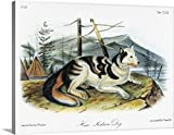John James (1785-1851) Audubon Premium Thick-Wrap Canvas Wall Art Print entitled Hare Indian, or Mackenzie River, dog, an extinct breed of domesticated dog