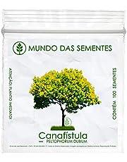 100 Sementes de Canafístula - Peltophorum dubium