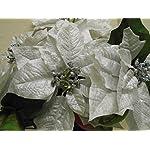 Silver-Christmas-Poinsettia-Bush-Artificial-Silk-Flowers-23-Bouquet-7-8801SL