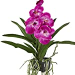 Nearly-Natural-Artificial-Plant-41-Vanda-Orchid-Hanging-Basket-Purple