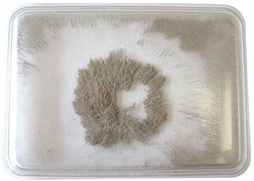 Iron Filings Pad (4 PACK / SET) _ Special Purchase (Iron Purchase)