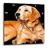 Dogs Golden Retriever - Golden Retriever - 15x15 Wall Clock (dpp_254_3)