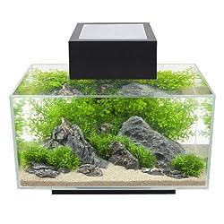 fluval-edge-6-gallon-aquarium-review