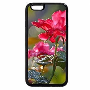 iPhone 6S / iPhone 6 Case (Black) Raindrops on Roses
