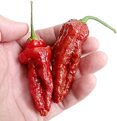 Big Bang Chocolate Naga Chilli Pepper Seeds x 10