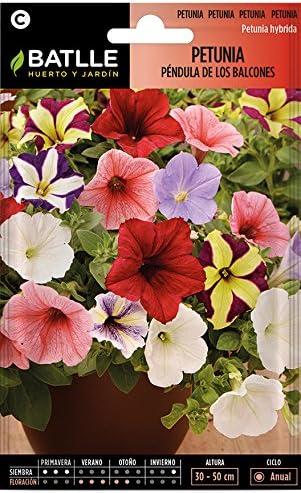 Semillas de Flores - Petunia Péndula de los Balcones - Batlle: Amazon.es: Jardín