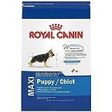 Royal Canin Croquetas para Perros Grandes, Maxi Puppy, 15.8 kg