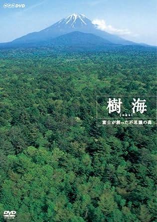富士山 樹海