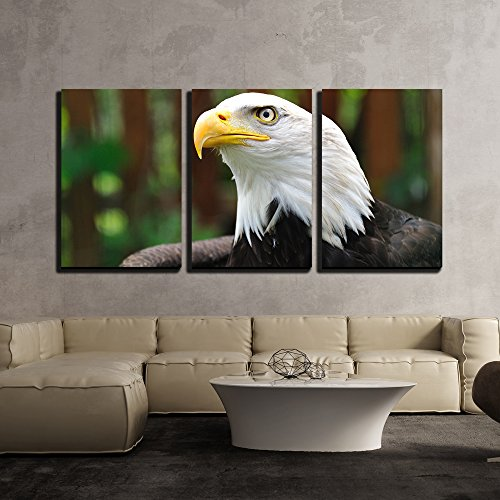 Bald Eagle Framed Art (wall26 - 3 Piece Canvas Wall Art - Bald Eagle | Bird in Wildlife - Modern Home Decor Stretched and Framed Ready to Hang - 16