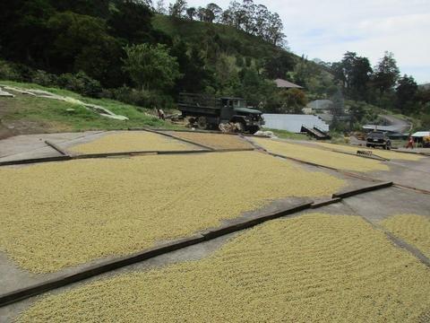 5 LBS Peru Decaf Organic Unroasted Green Coffee Beans