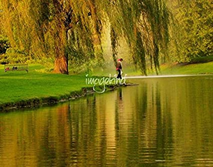 Wall Art Print entitled Weeping Willow Tree Nature Landscape Scene ...