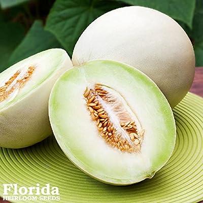 HONEYDEW MELON GREEN 50+ Heirloom Vegetable Seeds Smooth Round NON-GMO