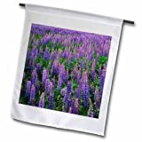 Danita Delimont – Charles Gurche – Flowers – USA, Washington, Clallam County, Lupine – 18 x 27 inch Garden Flag (fl_189717_2) Review