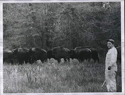 Vintage Photos 1992 Press Photo W.B. Brown Jumper and Buffalo