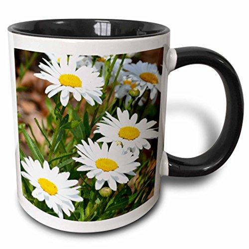 3dRose mug_56294_4