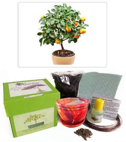 Citrus Tree Bonsai Kit - CERAMIC Pot/Seeds/Soil/Liquid Fertilizer/Training Wire/Drainage whole cover/Extra Seeds/Gift Tag grow your secret garden