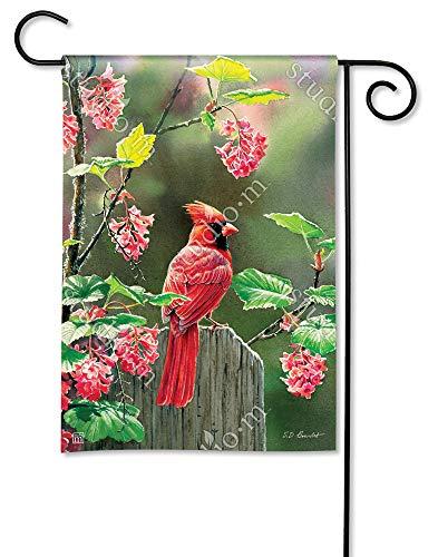 BreezeArt Studio M Cardinal Beauty Decorative Garden Flag - Premium Quality, 12.5 x 18 Inches