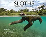 Sloths: Life in the Slow Lane