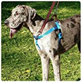 Freedom-No-Pull-Dog-Harness-Training-Package-58-XSmall-Red
