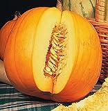 SeeKay Pumpkin Jack o Lantern - 25 seeds - Small Pumpkins - vegetable