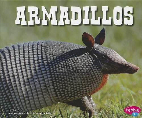 armadillos-north-american-animals
