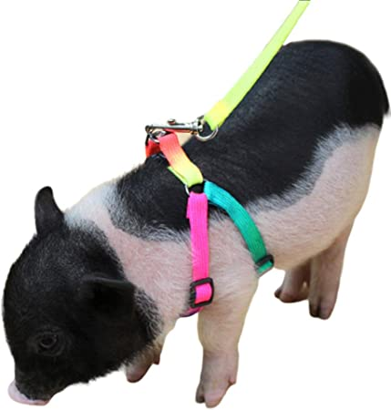 WOWOWO Adjustable Pet Angle Wing Rabbit Ferret Pig Harness Leash Lead Strap Nylon Cute