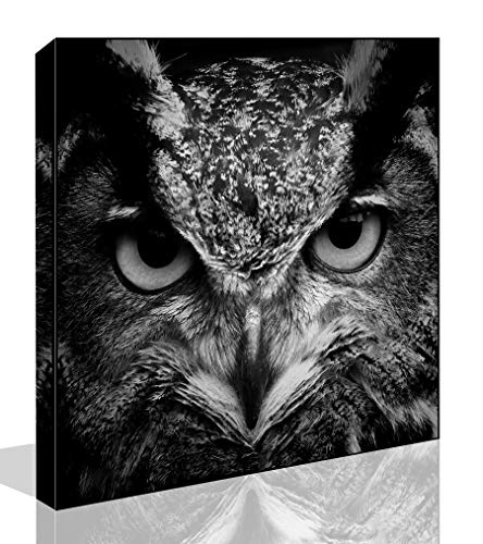 The Melody Art - Modern Giclee Prints All Framed Animal Artwork Black and White Owl Picture Print to Photo Printed Paintings on Canvas Wall Art Decor for Home Office Decorations 16 by 16 inch (On Owl Canvas)