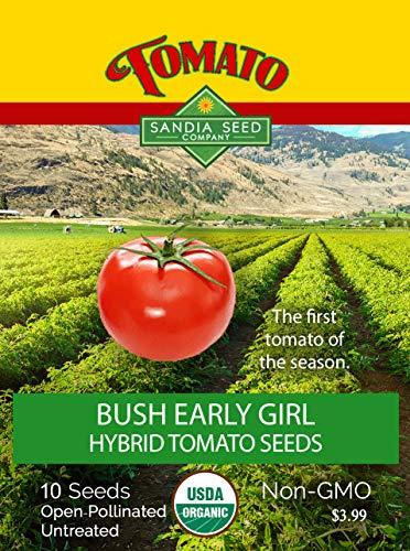 Early Girl Bush Hybrid Tomato - 10 Seeds - The earliest Tomato - Non-GMO