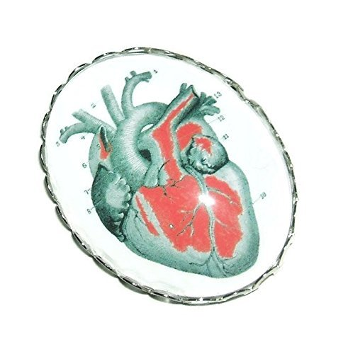 ANATOMICAL HEART BROOCH PIN SilverPltd with GLASS Dome Vintage Medical Illustration Chart