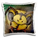 VWPICS MACRO INSECTS - Vespula germanica or German wasp - 16x16 inch Pillow Case (pc_23022_1)