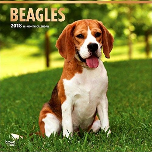 Beagles Calendar 2018 - Deluxe Wall Calendar (12x12)