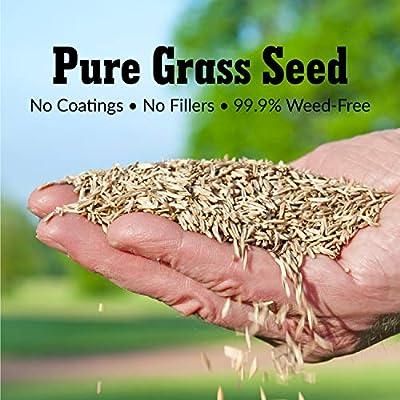 GreenView 2829346 Fairway Formula Grass Seed Turf Type Tall Fescue Sun & Shade Blend, 3 lb: Garden & Outdoor