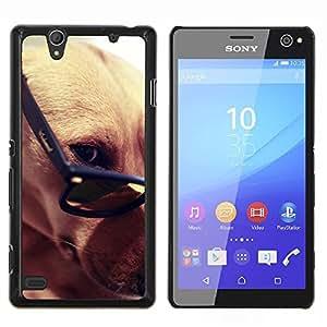 YiPhone /// Prima de resorte delgada de la cubierta del caso de Shell Armor - Greyhound gafas inteligentes del perro de Brown - Sony Xperia C4
