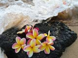 Plumeria On Lava Rock Hawaii -Oil Painting On Canvas Modern Wall Art Pictures For Home Decoration Wooden Framed (20X16 Inch, Framed)