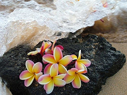 Plumeria On Lava Rock Hawaii -Oil Painting On Canvas Modern Wall Art Pictures For Home Decoration Wooden Framed (20X16 Inch, Framed) by Art Prints