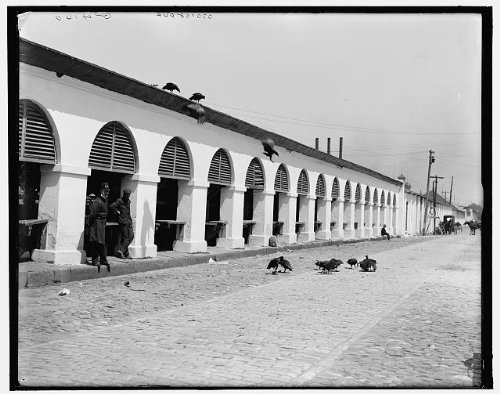 Photo: Central market,buzzards,vultures,streets,Charleston,South - Sc Market Charleston Street