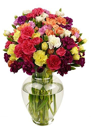 benchmark-bouquets-20-stem-rainbow-mini-carnations-with-vase