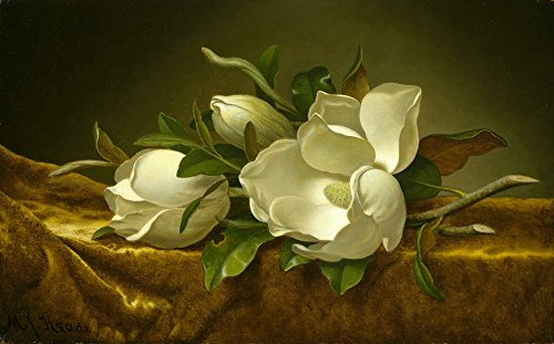Martin Johnson Heade Magnolia (Martin Johnson Heade Giclee Canvas Print Paintings Poster Reproduction(Magnolias on Gold Velvet Cloth))