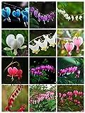 100 pcs/ bag 20 color Dicentra Spectabilis seeds Bleeding Heart classic cottage garden plant, heart-shaped flower, ferny foliage