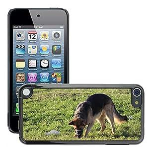 Print Motif Coque de protection Case Cover // M00125708 Perro Diversión Buscar Oler La Nariz // Apple ipod Touch 5 5G 5th
