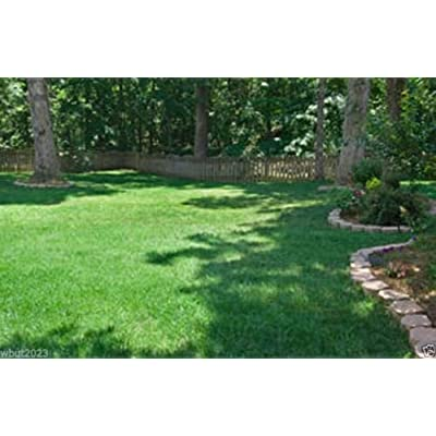 Fescue grass seed blend, Combat Extreme, excellent choice for- USDA Zones 6 - 7 : Garden & Outdoor