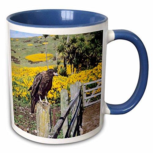 - 3dRose Danita Delimont - Birds - Striated Caracara bird, Falkland Islands - SA09 MZW0070 - Martin Zwick - 15oz Two-Tone Blue Mug (mug_141230_11)