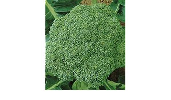 Las semillas de brócoli Vitaminnaya - Vitamina rusa de la herencia vegetal no-GMO: Amazon.es: Jardín