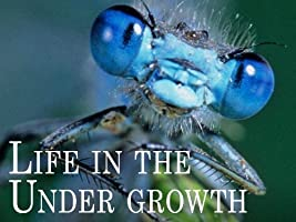 Attenborough: Life in the Undergrowth