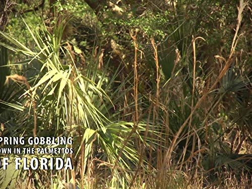 Spring Gobbling Down in the Palmettos of Florida