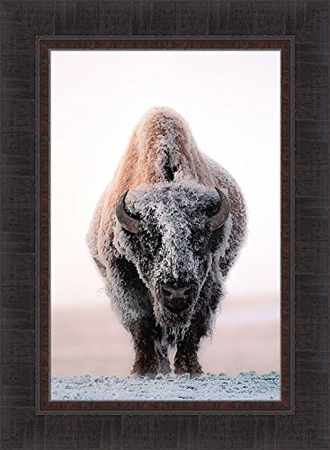 Ghost Of The Plains by Gary Crandall 17x23 Bison American Buffalo Winter Snow Frost Photograph Framed Art Print Picture