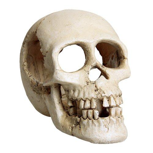 Image of Underwater Treasures 53334 Skull