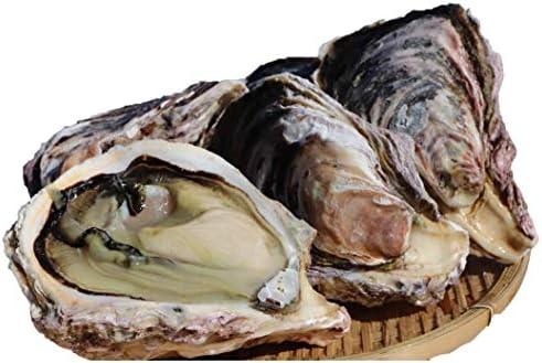 宮崎県産 幸徳丸の細島岩牡蠣(生食)8kg(26個〜39個)Lサイズ(201g~300g) ☆こだわりの岩牡蠣をご堪能!贅沢BBQやギフトにもオススメ!
