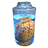 Mad Scientist Lighted Brain in Jar Halloween Prop